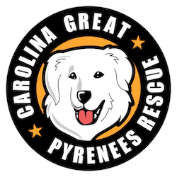 Carolina Great Pyrenees Rescue